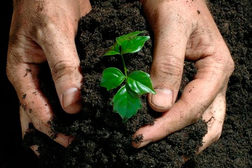 SAIBA COMO ESCOLHER O ADUBO PARA PLANTAS IDEAL PARA SEU JARDIM